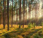 Коттеджный поселок «Лесной»